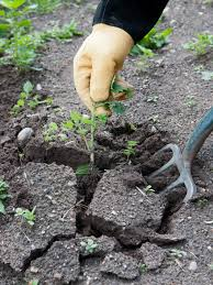 What Type Of Soil For Vegetable Garden Three Types Of Weeds Hgtv