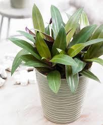 Buy House Plants