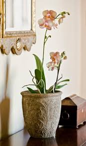 the garden plot from luxury to steampunk indoor plants are