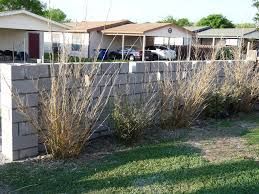 covering a cinder block wall here u0027s what you need to know how