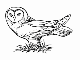 owl coloring pages u2014 fitfru style printable owl coloring pages