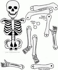 skeleton coloring pages to print halloween pinterest