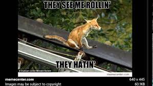 Fox Meme - fox meme slideshow made just for redfox youtube