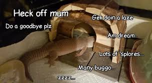 Reptile Memes - reptile memes i have collected over the past month album on imgur