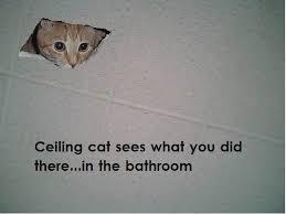 Ceiling Cat Meme - image 28779 ceiling cat know your meme