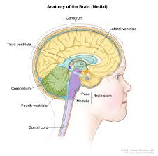 Role Of Brain Stem Childhood Ependymoma Treatment Pdq U2014patient Version National