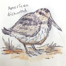 field guide to dumb birds of north america