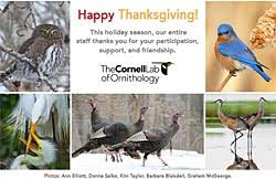 happy thanksgiving from the cornell lab all about birds