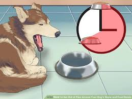 Getting Rid Of Flies In Backyard 3 Ways To Get Rid Of Flies Around Your Dog U0027s Water And Food Bowls