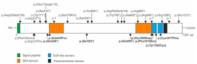 genes free full text mutations in the genes for