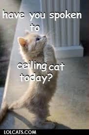 Ceiling Cat Meme - lolcats ceiling cat whitnes