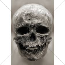 Human Anatomy Skull Bones Human Skull Bone Gl Stock Images