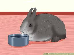 Rabbit Hutch For Multiple Rabbits How To Care For Jersey Wooly Rabbits With Pictures Wikihow