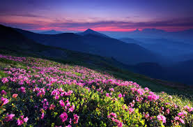photos of flowers flowers mountainm flowers landscape ocean nature beautiful high