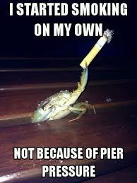 Who Cares Meme - nautical pun crustacean wont be a thing but who cares meme guy