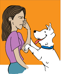 top 5 tips to get rid of your dog u0027s bad breath simple wag