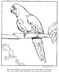 enchanting macaw coloring page 18 on download coloring pages with