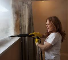 steam cleaner for bathrooms web value