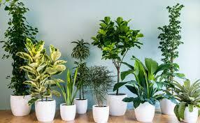 plant stunning cool indoor plants a stunning amsterdam loft