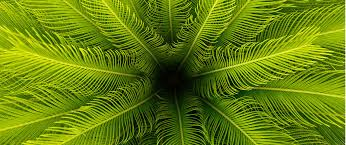 Tropical Plants Images - tropical plants for sizzling summer containers