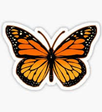 butterfly gifts monarch butterfly gifts merchandise redbubble