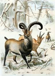 november birth animal de extinction wikipedia