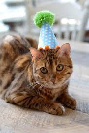 happy birthday baby mufasa