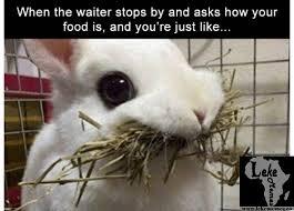 Eating Meme - waiter asks how s your food while your eating rabbit meme lekememes