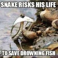 Funny Fish Memes - me 35 funny fishing memes