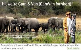 african safari animals my amazing south african safari wedding ready set safari