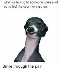 Dog Smiling Meme - 25 best memes about smile through the pain smile through the