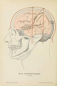 Human Anatomy Atlas 144 Best Skelets Images On Pinterest Human Anatomy Animal
