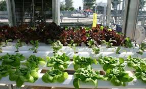 pros and cons of hydroponic gardening