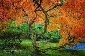 portland japanese garden 1001 gardens
