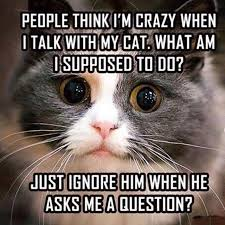 Crazy People Meme - 14 memes that are so true for cat people cuteness
