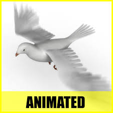 dove flying animation