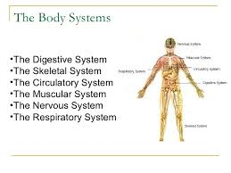 Human Anatomy And Body Systems The Human Body Systems1