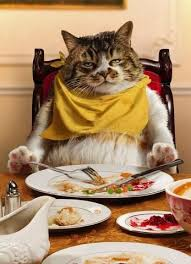 Thanksgiving Cat Meme - pick funny thanksgiving cat aftermath of the day fun sites cat