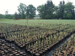 native plant centre project new york city greenbelt native plant center