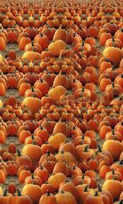fall pumpkin wallpaper 16 best halloween stacked pumpkins images on pinterest