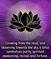 Blue Lotus Flower Meaning - lotus flower quotes like success