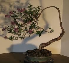 pot bonsai design iker bonsai pots u2013 colorado rocky mountain bonsai u2013 suiseki