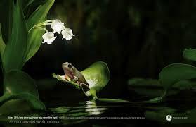 Flower Light Bulbs - ge cfl light bulbs fireflies frog flowers print usa