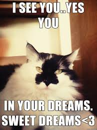 In Your Dreams Meme - my car quinn stars in meme called i see you yes you in your dreams