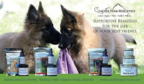 belgian sheepdog breeders in ohio intention hill belgian shepherds blackbelly sheep