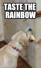 Silly Memes - for animal people silly dogs dog and animal