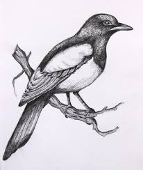 photos pencil drawing of love birds drawing art gallery