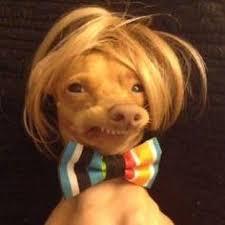 Blank Meme Maker - phteven dog meme maker dog best of the funny meme