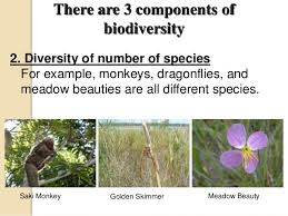 biodiversity value and threats