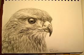 charcoal sketch bird by ashlin422 on deviantart